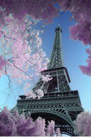 Paryż Wieża Eiffla - David Clapp - plakat