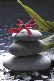 Zen Stones - Orchidea - plakat