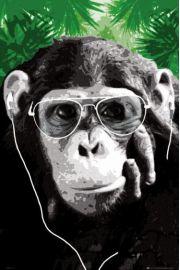 Steez Monkey - Małpa w Okularach - plakat