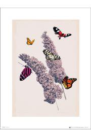 Motyle Butterflies Flowers - art print