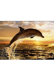 Steve Bloom Delfin plakat 3D