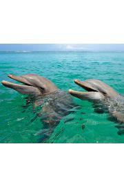 Szczęśliwe Delfiny - plakat