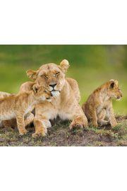 Rodzina Lwów - plakat