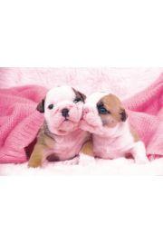 Pocałunek Szczeniaków - Psy - plakat