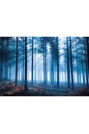 Las i Promienie Słoneczne - plakat