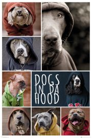 Dogs In da Hood Psy - plakat