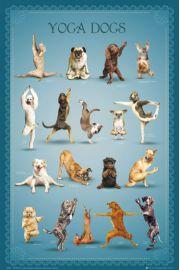 Joga - Zabawne Figury - Psy - plakat