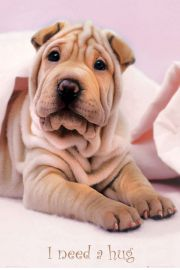 Przytul Mnie - Pies Shar Pei - Keith Kimberlin - plakat