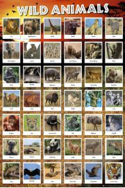 Dziki Świat Zwierząt - plakat