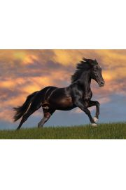 Bob Langrish Piękny Koń - plakat