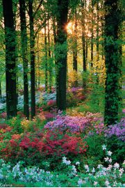 Le�ne Kwiaty - Flower Forest - plakat