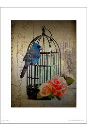 Birdcage Vintage - art print