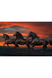Bob Langrish Piękne Konie - plakat