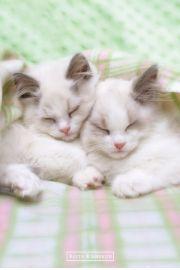 Śpiące Kotki Keith Kimberlin - plakat