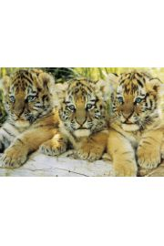Młode Tygrysy - plakat