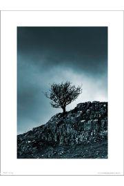 Dark Winter Tree - art print