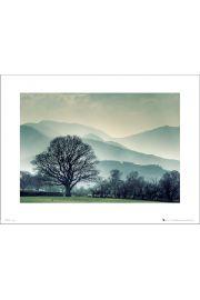 Winter Tree Landscape - art print