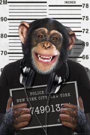 The Chimp Małpa w Więzieniu - plakat