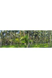 Las Palmowy - plakat