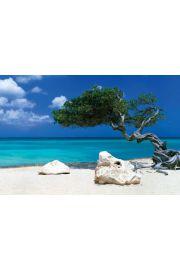 Karaiby - Drzewo Divi Divi - Piękna Plaża - plakat