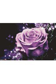 Czarna Róża - plakat