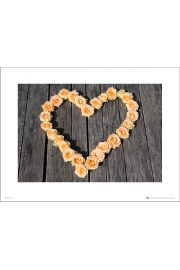 Heart Roses - art print