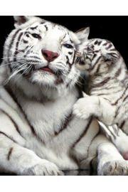Białe Tygrysy - Pocałunek Dziecka - plakat