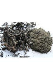 Titepati (Artemisia tibet.), Ganden Khaenpa