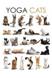 Joga - Zabawne Figury - Koty - plakat