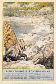Dinozaury - Dimetrodon i Edafozaur - plakat