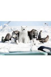 Polarne Zwierzęta - plakat