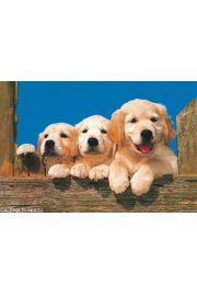 Szczęśliwe Psy - Golden - plakat