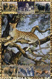 Zwierzęta Afryki - plakat