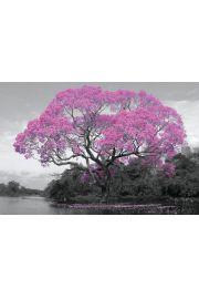 Kwitnące Drzewo Wiosna - plakat