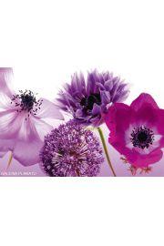 Purple Summer - Maki, Chabry ... - plakat