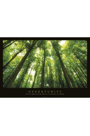 Opportunity - Las, promienie �wiat�a - plakat motywacyjny