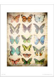 Butterflies Vintage - art print