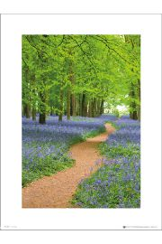 Tom Mackie Path - art print