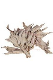 Bia�a sza�wia - susz - opakowanie 25 gram