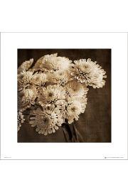 Bukiet Kwiatów Sepia - art print