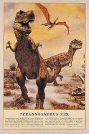 Dinozaury - Tyranozaur Rex - plakat
