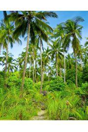 Palmy w Dżungli - plakat