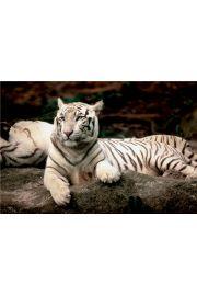 Puzzle Bengalski tygrys 1500