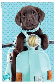 Studio Pets Labrador na Skuterze - plakat