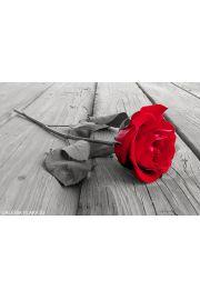 Czerwona Róża na Deskach - plakat