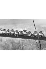 Nowy Jork - Małpy na Belce - plakat