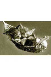 Kotki w Hamaku - plakat