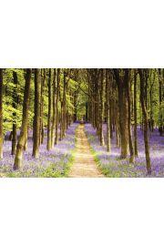 Ścieżka w Lesie - Wrzos - Woodland Path - plakat