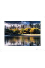 Forest Autumn Light - art print