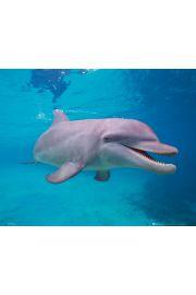 Delfin - plakat
